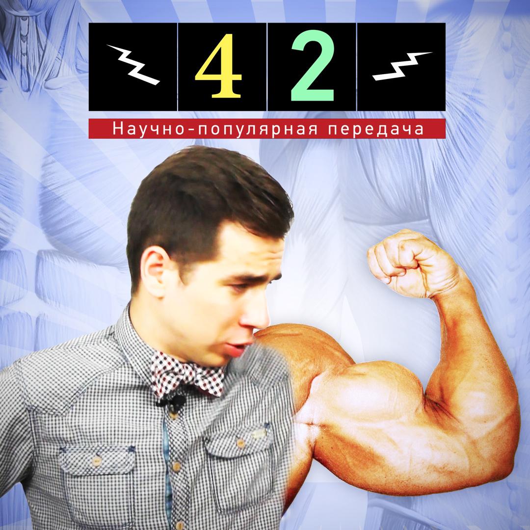 биология,мышцы,спорт,человек,, Физика качалки. Как растут мышцы?