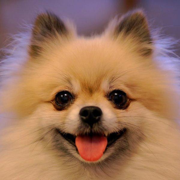 YouTube,Twitter,Instagram,соцсети,животные, Забавный щенок стремительно покоряет YouTube