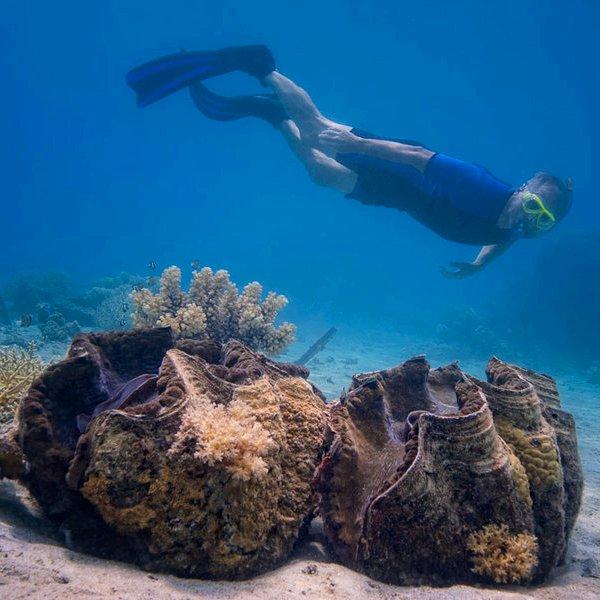 Исследование, возобновляемая энергия, энергетика, природа, биология, животные, фауна, океан, море, вода, Гигантская тридакна - причина революции в сфере возобновляемой энергетики
